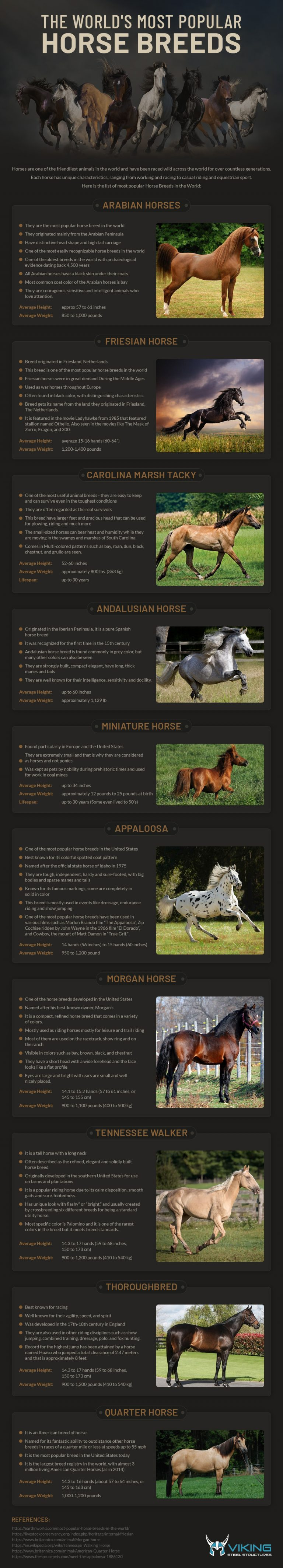 The World's Most Popular Horse Breeds